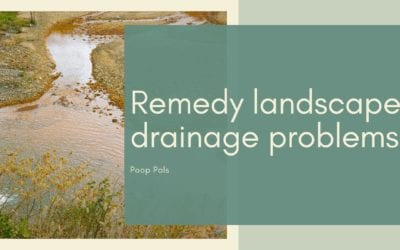 Remedy landscape drainage problems