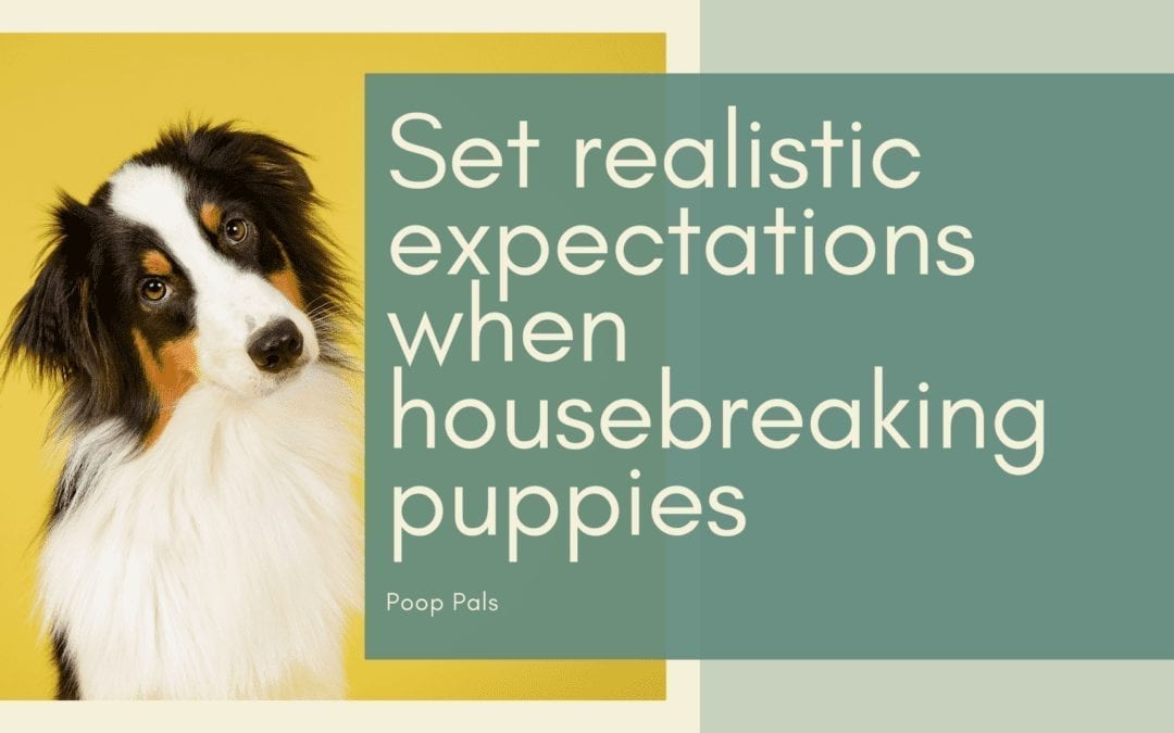 Set realistic expectations when housebreaking puppies